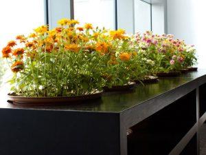 tuin laten onderhouden Almere