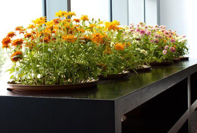 Tuin laten onderhouden in Almere